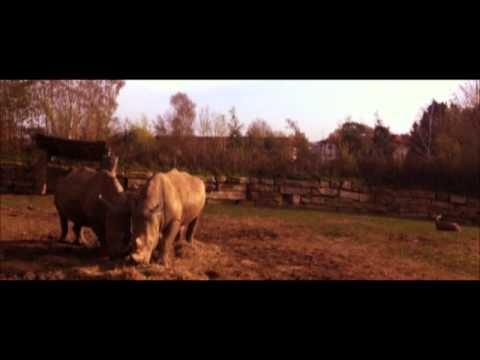 Chessington: Movie
