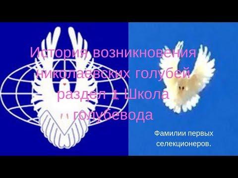 История возникновения николаевских голубей раздел 1 Школа голубевода