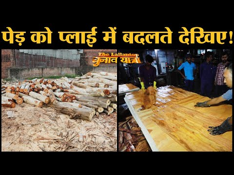 Making of Plywood देखिए Asia No 1 Ply Wood Industry Yamunanagar में | Haryana | Wood