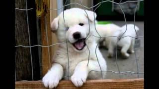 Śmieszne zwierzęta psy, koty, wiewiórki, chomiki
