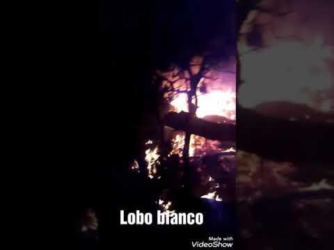 Incendio En. Tejabanes Carmen N. L