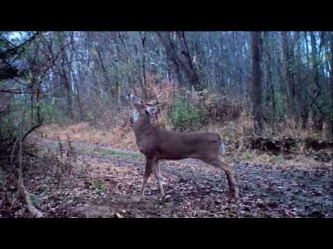 2015 Trail Cam Videos