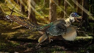 New species of bird like dinosaur discovered in China