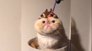 CrazyShows: Funny animals compilation. TRY NOT TO LAUGH :)