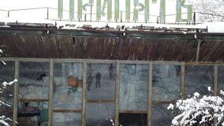 Шокирующие существа  Тайны Чернобыля   Слабонервным не смотреть