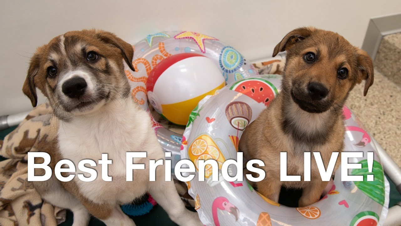 Puppy cam - 2 hours of adorable puppies playing and laying around Best Friends Animal Sanctuary