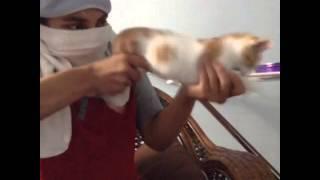 Machine Gun Cat Best Vines