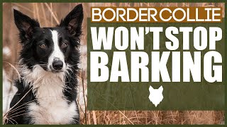 How To Stop Your BORDER COLLIE Barking