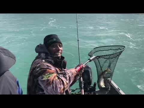 Lake Erie Perch Fishing With A Surprise!