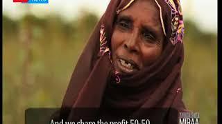 Mother of Miraa: Widow labourers of marsabit county
