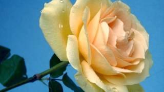 Kasam Se Kasam Se Aashiqui Hai Tumse [Full Song] (HD) - Do Aankhen Barah Hath