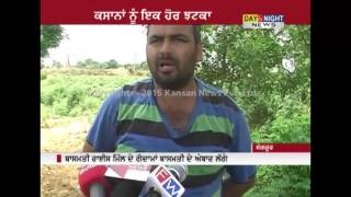 Punjab Basmati rice farmers unhappy as price falls | Sangrur