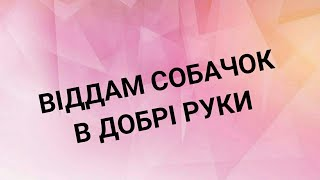 ВІДДАМ Собачок в добрі руки / Львів /🐶🐶🐶