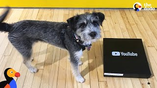 Rescue Dog Licks Peanut Butter Off YouTube Play Button Award | The Dodo LIVE