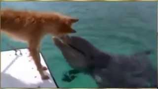 По милости Всевышнего дельфин спасает собаку