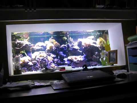 Eclairage Led Diy High Power Aquarium Recifal Fishtank Youtube