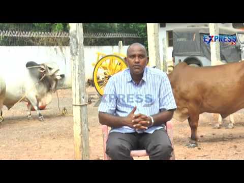 Punganur Cow Breed Developed by Bhanu Prakash Vallabhaneni - Express TV