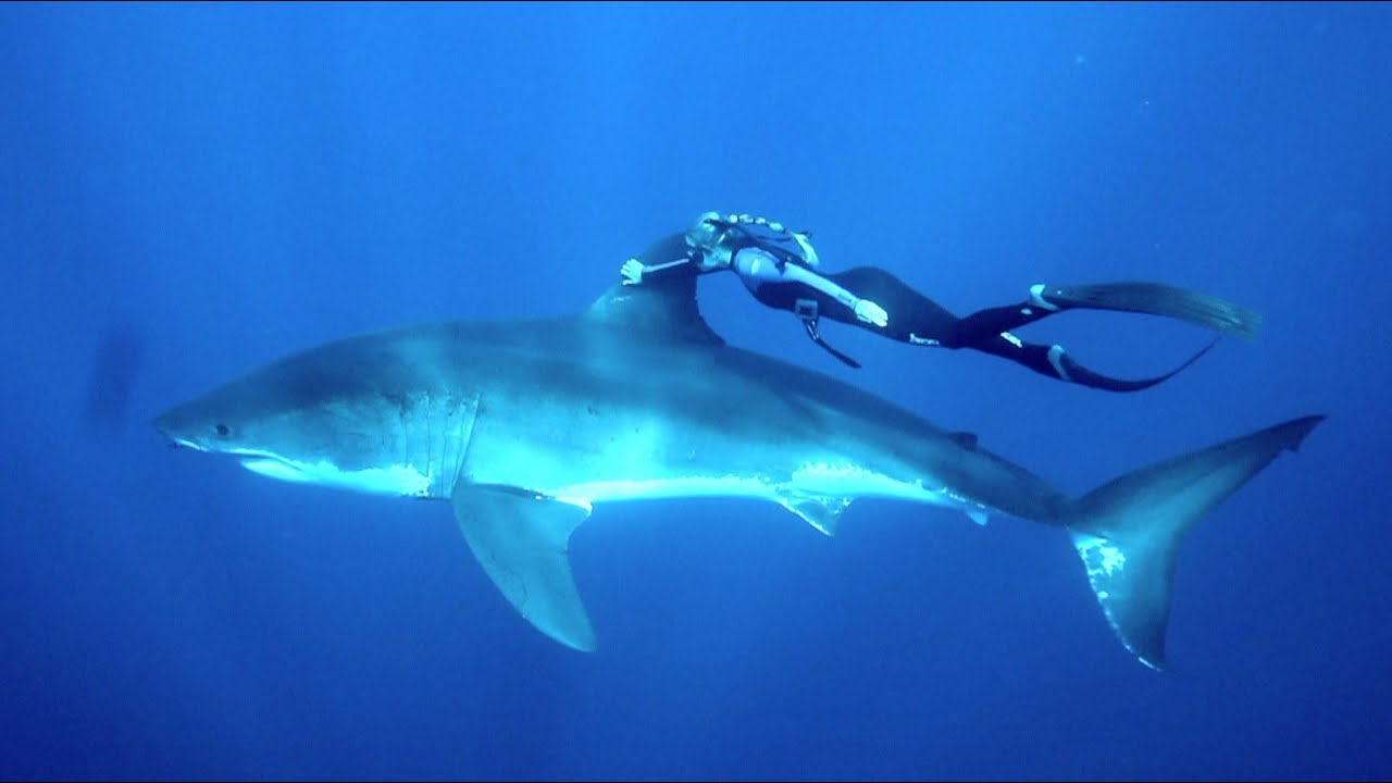 GoPro: Ocean Ramsey and a Great White Shark