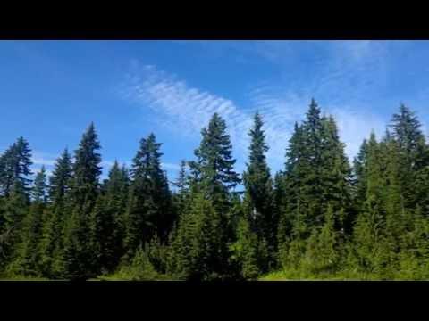 superlative tree in the world