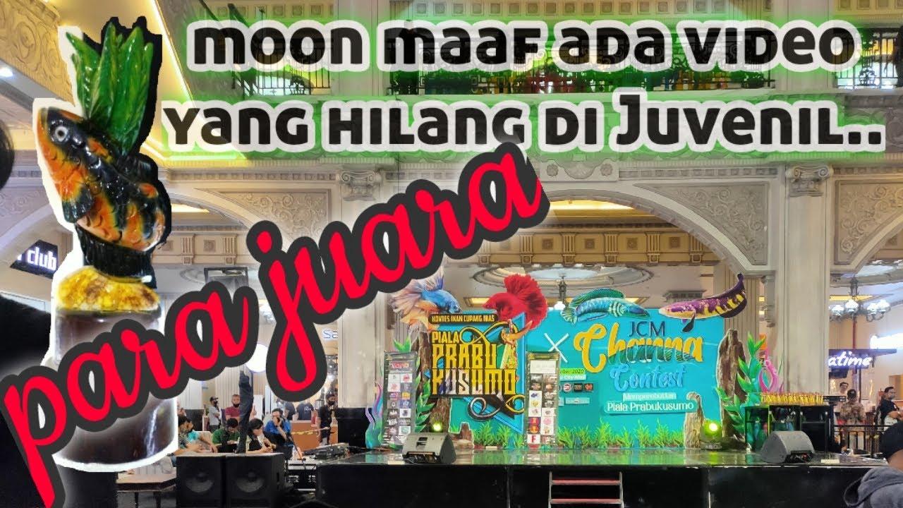 Download Inilah Para Channa Juara Di Piala Prabu Kusuma JCM