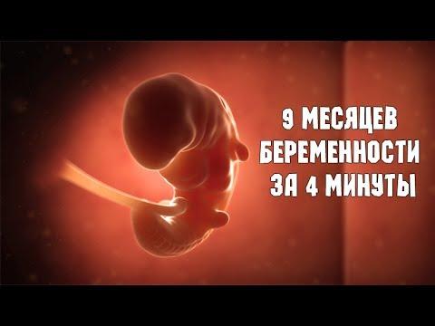9 месяцев беременности за 4 минуты смотреть