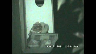 Yori Ranches Owlets May 21, 2011