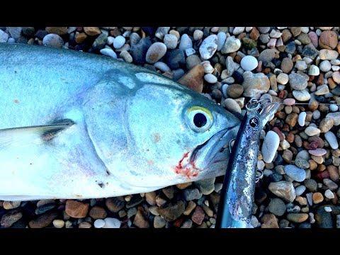 FINALMENTE! Pesce Serra a SPINNING da Riva (e NON SOLO!) - Attacco in DIRETTA