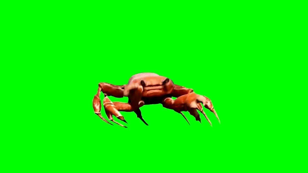 [Green Screen] Crab Rave (Dancing Crab)