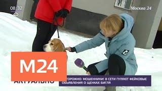 В Сети гуляют фейковые объявления о щенках бигля - Москва 24