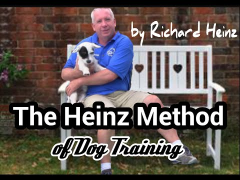 How to teach your puppies and dogs Boundary Training!