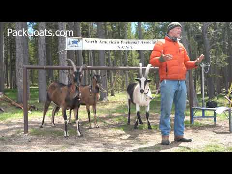 How To Train Pack Goats