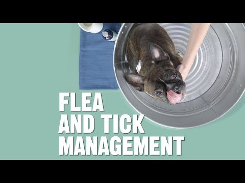 How Do Get Rid Of And Prevent Fleas And Ticks