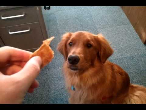 How Old Is The Dog That Cant Catch Food