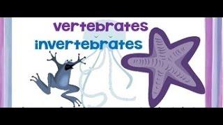 Vertebrates and Invertebrates animals - Video for kids