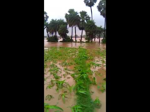 Vital flood in jharkhand chatra (Hunterganj) 12/8/2016
