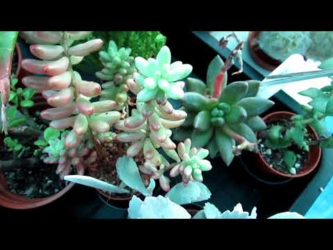 Plant jobs to do in December - Pruning & Cleaning & checking for pests