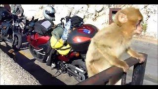Motocyklowy rajd na Gibraltar cz.3: Kadyks i Gibraltar - Motocyklowa TV
