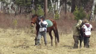 дистанционный конный  пробег