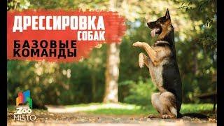 Базовые команды в дрессировке собак | Как правильно дрессировать собаку | Дрессировка и воспитание