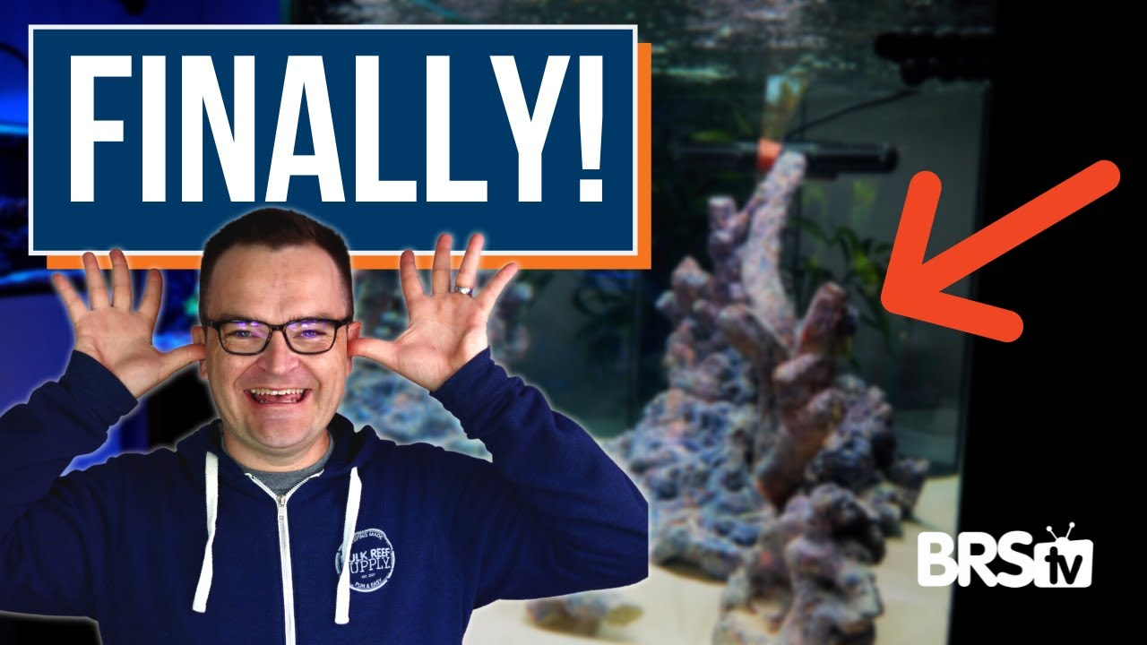 How To Add Sand & Water To Your Reef Tank | Ultimate Beginner Series #16, from My First Fish Tank