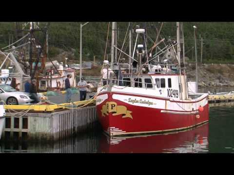 irish descendants go to sea no more