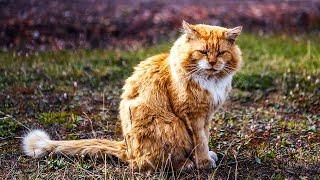 Этот рыжий кот живет там, где нельзя жить котам