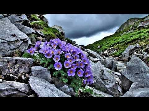 Жизнелюбы.  И на камнях растут цветы.