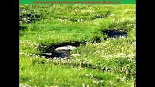 Entspannung und Heilung: Geräusche Download - Wildbach Natur erleben - Qi Gong Meditation