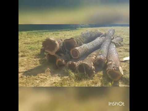 Shipping logs.