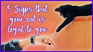 ARE CATS LOYAL? 5 SIGNS that your CAT IS LOYAL
