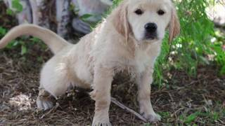 Housetraining Puppies