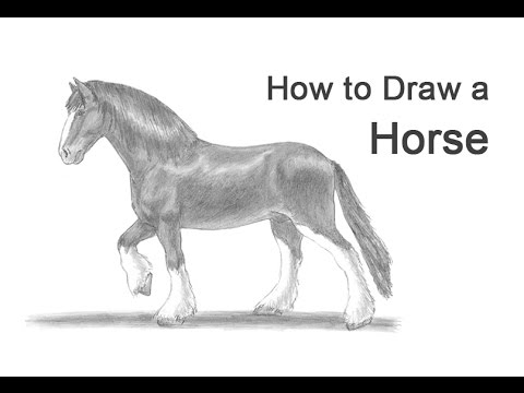 How to Draw a Horse (Clydesdale/Shire)