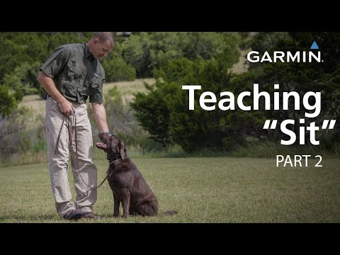 "e-collar-training-with-garmin:-teaching-""sit,""-part-2"
