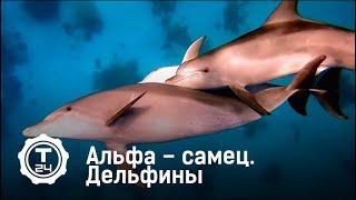 Альфа – самец. Дельфины | Т24